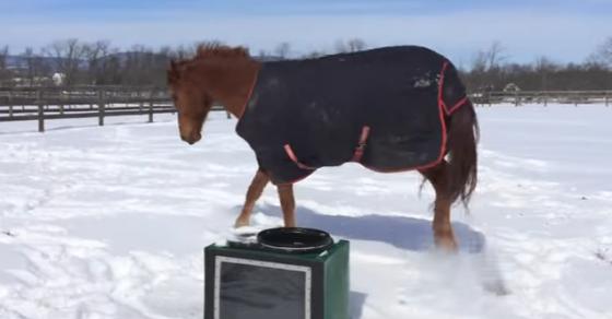 И коњите се радуваат на снегот   ова видео ќе ви го стоплат срцето