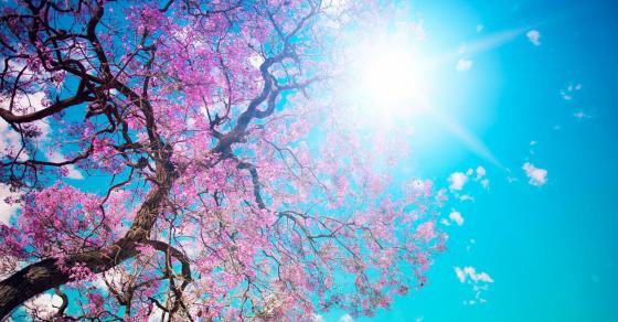 Сонце на првиот пролетен ден  Временска за цела недела