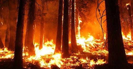 Шумски пожар беснее во Калифорнија