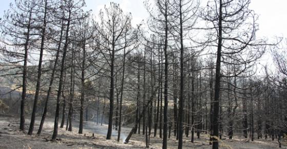 ЦУК  Повторно е активен пожарот во близина на Трескавец