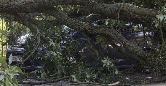 Стравично невреме во Полска   стебло од дрво усмрти две деца