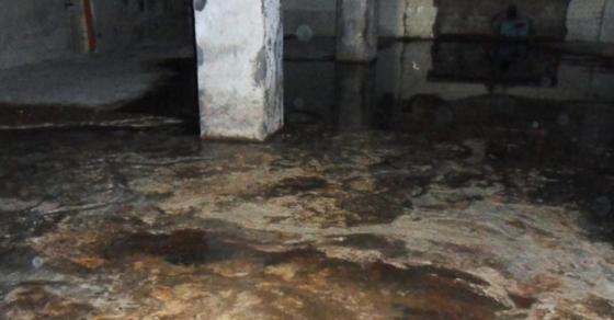 Полицијата во Њујорк не можела ни да сонува дека ќе пронајде вакво нешто во подрумот на една куќа