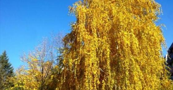 Магијата на жолтата боја   денес почнува есента