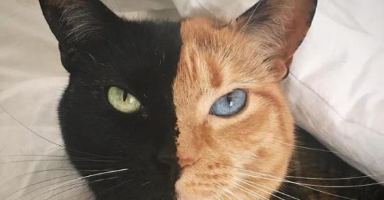 Запознајте ја Венера  најубавата мачка на светот на која не и треба фотошоп