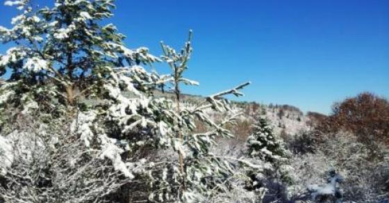 Четири сантиметри снег во Маврово   каде вееше снег