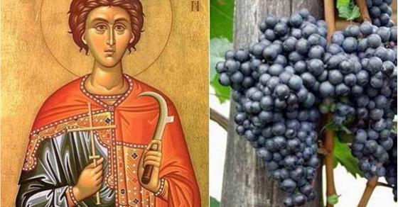 Денеска е Свети Трифун   заштитникот на лозарите