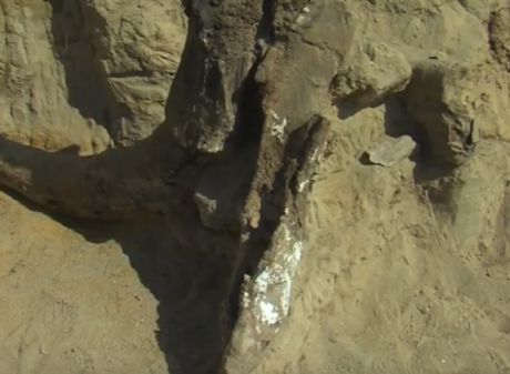 Пронајдени коски од праисториски слон во Македонија - прв ваков случај во Европа и Азија